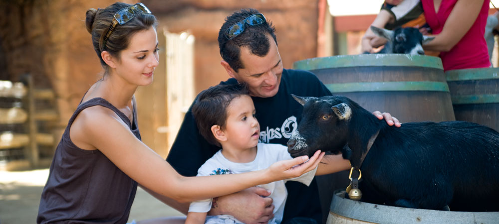 Family Petting Goat